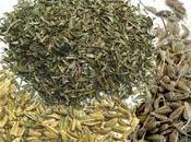 Tisane toux grasse
