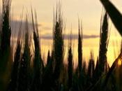 Politique agricole Commune voix associations