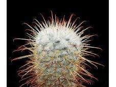 saviez-vous anecdotes autour cactus