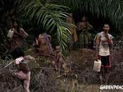 [Déforestation Crime organisé] Tiger expédition bloquée Sinar