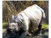 Extinction rhinocéros Java Viet-Nam