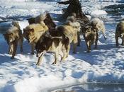 metamorphoses sila mythologie chamanisme inuit