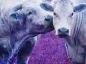 L'amour vache. Entre poids lourds