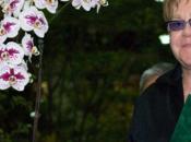 L'orchidée Elton John