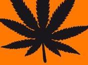 6-31/12 monologues marijuana Théâtre Poche
