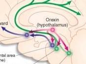 ÉQUILIBRE ALIMENTAIRE: chaque nutriment activité cérébrale Neuron