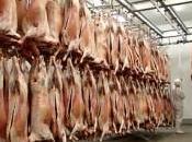 fournisseur viande ouvre portes