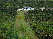 37ème Rallye Bandama, Etat grâce…