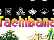 Tachibana, légende couleur mandarine