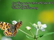 Parole Papillons Carte géographique Piéride