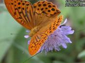 Parole Papillons Nacré Tabac d'Espagne Vulcain