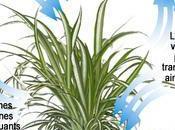 plantes d'appartement contre pollution appartements