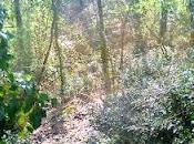 dans forêt