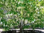 l'arbre voeux Yoko