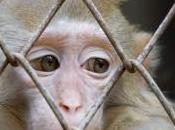 étude Born Free épingle parcs zoologiques français