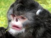 espèces surprenantes découvertes 2011