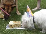 fêtes d'anniversaire chien