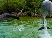 Cuba: dauphins flamants roses (mais plastique!!)