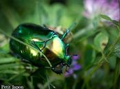 Photo mois vert