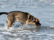 dangers plage pour votre chien Partie