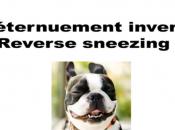 Conseils pour gérer l'éternuement inversé chez chien reverse sneezing
