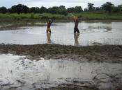 L'Afrique manque d'eau