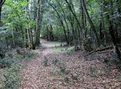 Ballades Bois Portail