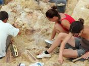 nouveau type dinosaure découvert France
