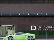 Hôtel luxe pour chiens