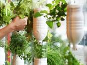 Faire pousser légumes dans appartement avec système Windowfarms