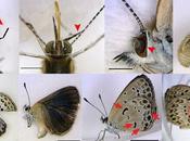 papillons mutants Fukushima entre manipulation médiatique illusion statistique