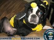 derniers records canins Guinness Book