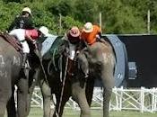 Polo d'éléphant Thaïlande trafic d'ivoire [HD]