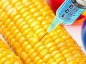 OGM, comment défricher débat
