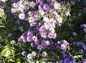 fleurs pour Jacques Dikansky Naturex
