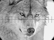 2012 loup, ennemi public numéro