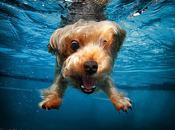 meilleur l'homme comme vous l'avez jamais (underwater dogs Seth Casteel)