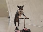 chiens skaters musée Mercedes Benz