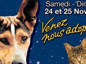 Noël animaux abandonnés 2012 Porte Versailles