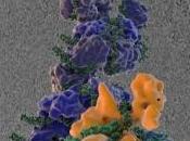 GRIPPE: scientifiques décryptent réplication virus Science