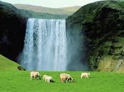L'Islande très bien, merci...