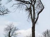 très arbre forêt Commercy Sorbus domestica