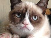 Grumpy Entrevues avec chat grincheux.