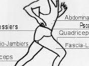 Docteur Schwarzy, quels muscles j'utilise quand cours