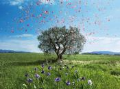 Soin Visage, L'Occitane Provence