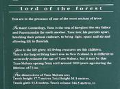 Jour forêts Kauri
