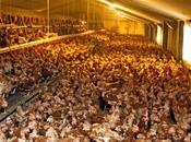 monde l'élevage mains multinationales