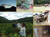 dernière vendange l'année 2012 chez vigneron