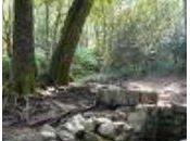 """Harpe celtique """"chemin brume""""..."""