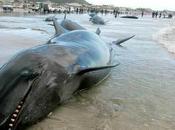 Massacre baleines transformées paté pour chien